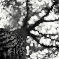 Trees Of Life II by cameraflou