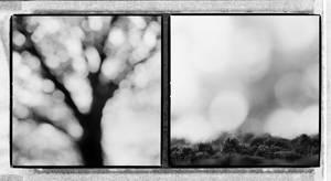Trees Of Life III