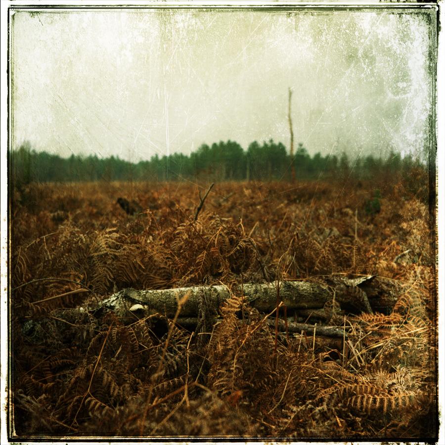 Bare Tree by cameraflou