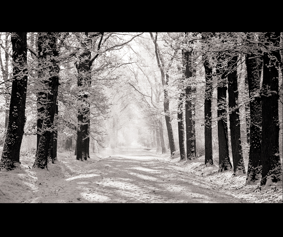 Light and snow by cameraflou