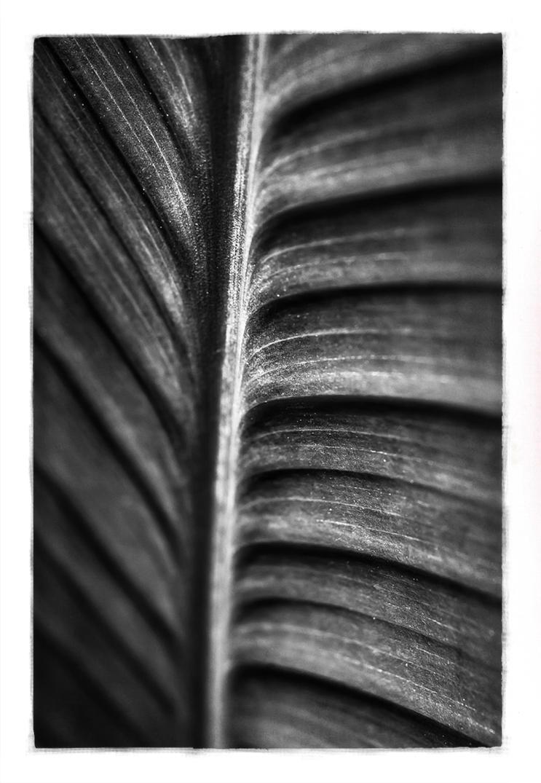 Spine by cameraflou