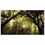 through the forbidden forest