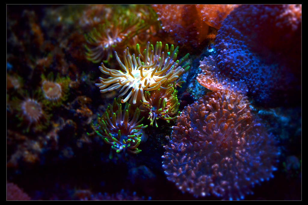 Coral And Anemones by pixini