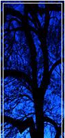 [Divider] Tree Silhouette