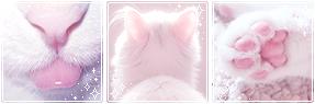 [Divider] Kitty Aesthetic