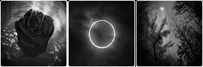 [Divider] Dark Nature Aesthetic