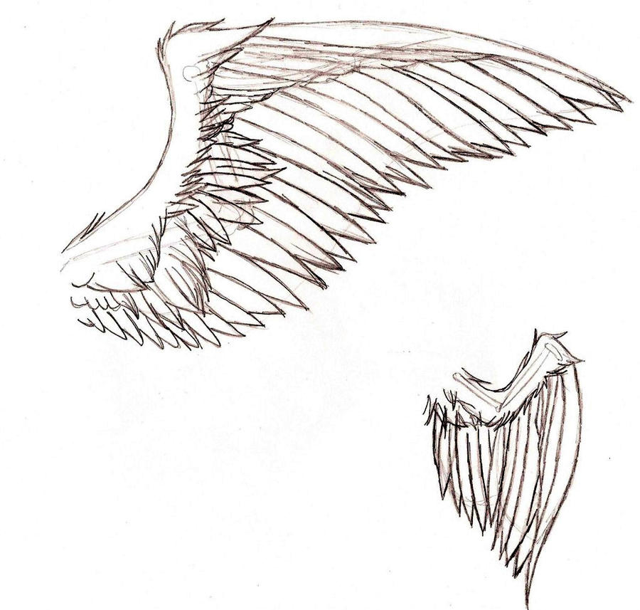 Swan wing drawing
