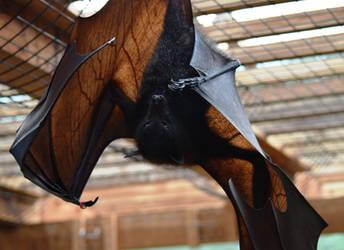 Feeling Batty