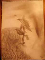 Flower by Sissyke