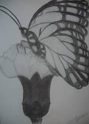 Butterfly by Sissyke