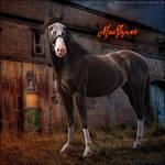 HEE Horse Avatar - Macgyver