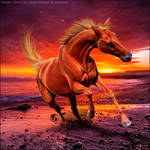 HEE Horse Avatar - Once In A Lifetime