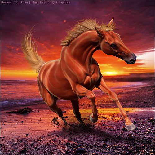 HEE Horse Avatar - Once In A Lifetime by art-equine