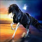 HEE Horse Avatar - Sun and Moon