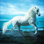 HEE Horse Avatar - Tempo