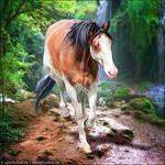 HEE Horse Avatar - Enchantress