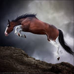 HEE Horse Avatar - Exaltation