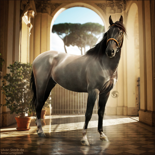 HEE Horse Avatar - Vicenza by art-equine