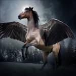 HEE Horse Avatar - Su'en