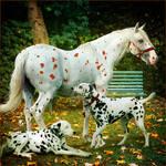 HEE Horse Avatar: Pongo