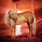 HEE Horse Avatar: Atral