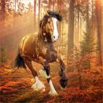 HEE Horse Avatar: Spotlight
