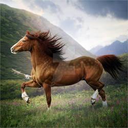 HEE Horse Avatar: Byrjun