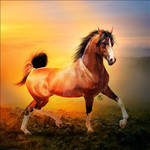 HEE Horse Avatar: Loford