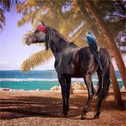 HEE Horse Avatar: Captain Jack Sparrow