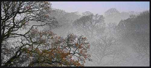 Trees in a Mist by sags