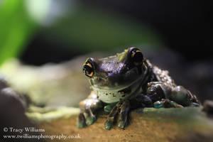Friendly Frog by twilliamsphotography