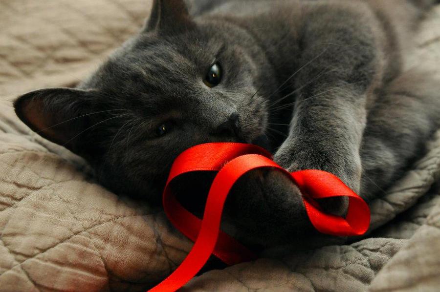 Maji svatki za gnjaviti...[Ne zamerite mi...] A_cute_cat_by_bunnyi-d4nsdf5