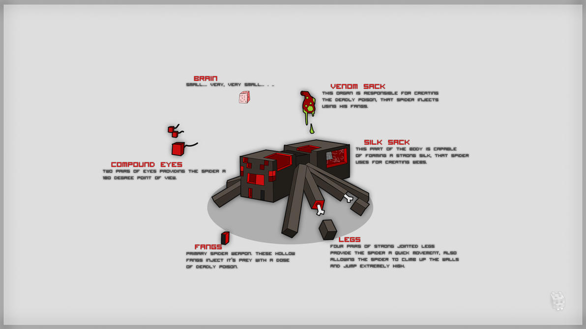 Minecraft Spider Anatomy by Dentvanboo on DeviantArt
