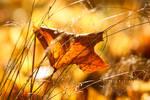 Goldener Herbst by Sophie-Wieland