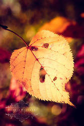 Herbstfeuer by Sophie-Wieland