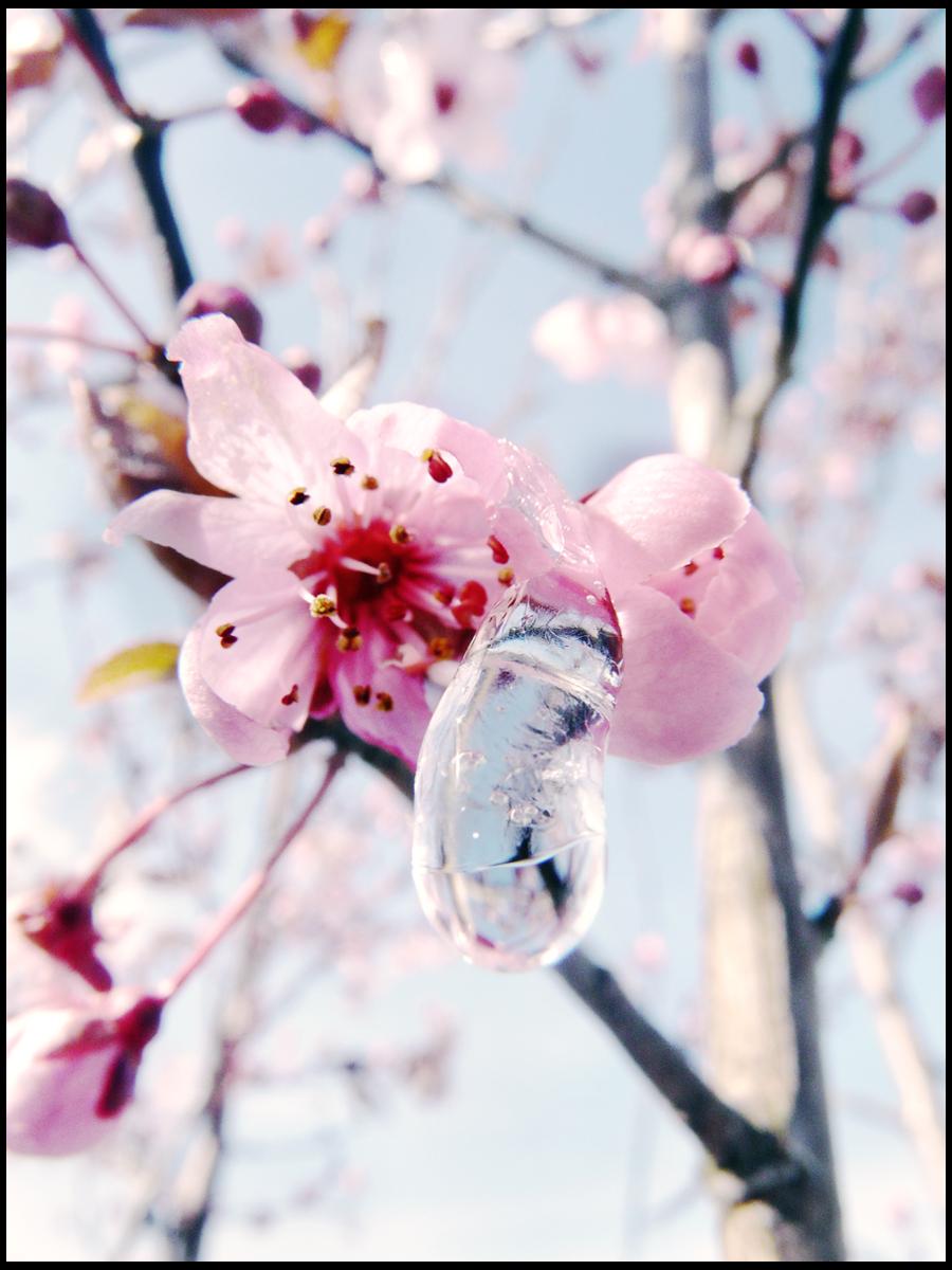 Winter in spring.