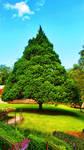 The big tree by marianaluiza