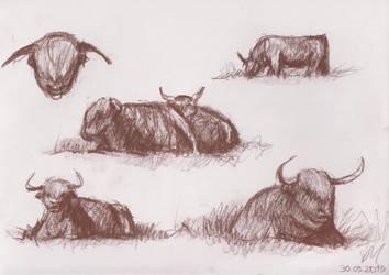 Hairy bulls pt. 1 by ciacheczko