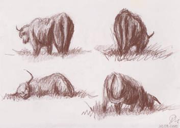 Hairy bulls pt. 2 by ciacheczko