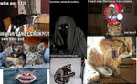 Funny Cat Background 2
