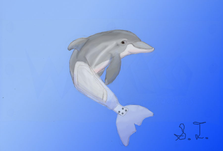 Winter the Dolphin by Warcheeso on DeviantArt