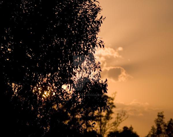Sunset Through the Trees by evilrhinoart on DeviantArt