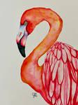 A Flamingo #4