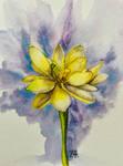 A Yellow Lotus