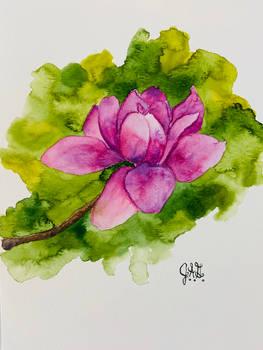 A Vulcan Magnolia Bloom