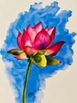 A Pink Lotus Bloom