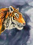 A Siberian Tigress