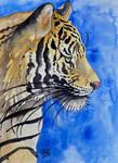 Sketch of a Siberian Tiger