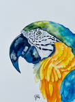 The Blue and Gold Macaw Parrot