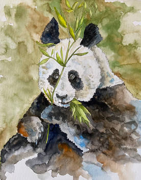 The Chinese Giant Panda Bear